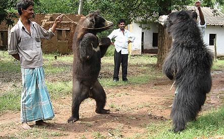 Dancing Bear Video