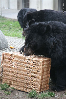Bodo enjoying his Christmas hamper